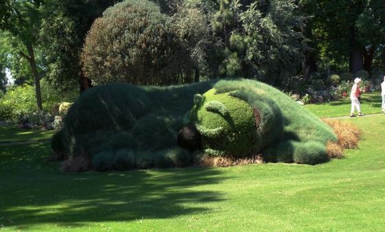 ourson jardin des plantes